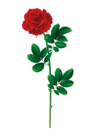 tige: Illustration vectorielle - unique rose rouge
