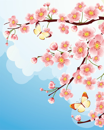 """cherry blossom"": Vector illustration -  cherry blossom"