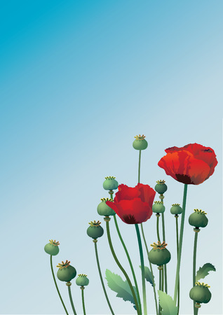opium: Vector illustration with two poppy Illustration