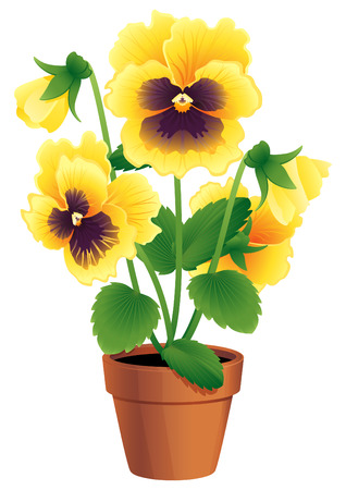 terracotta: Vector illustration - Pansies in a terracotta pot Illustration
