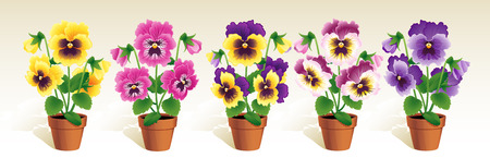 earthenware: Vector illustration - Pansies in a terracotta pots