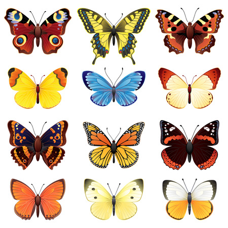Vector illustration - butterfly icon set Illustration
