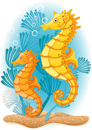 Vector illustration - Two seahorses  on the seabed Vector