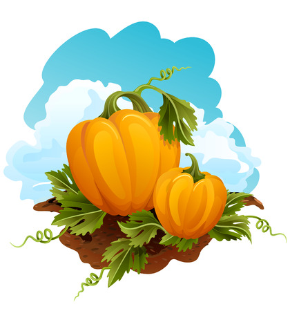 Vector illustration - Two pumpkins in the field Vector