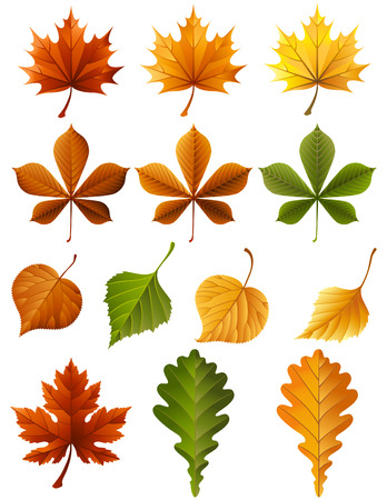 Vector illustration - autumn leaves  icon set Vector
