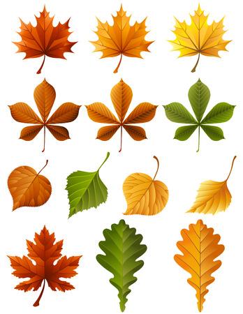 fale: Vector illustration - autumn leaves  icon set Illustration