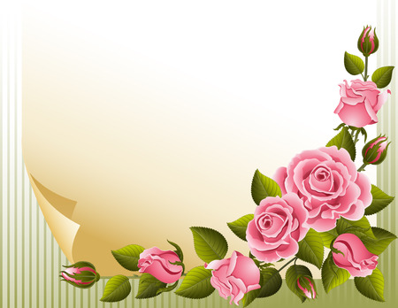 a bud: Vector illustration - pink roses and paper