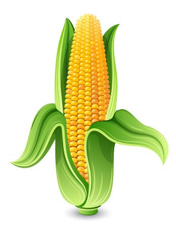 planta de maiz: Ilustración vectorial - Corn oído aislado en blanco