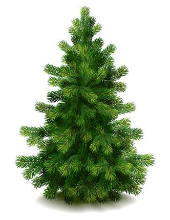 abeto: Vector illustration - pine tree on white background