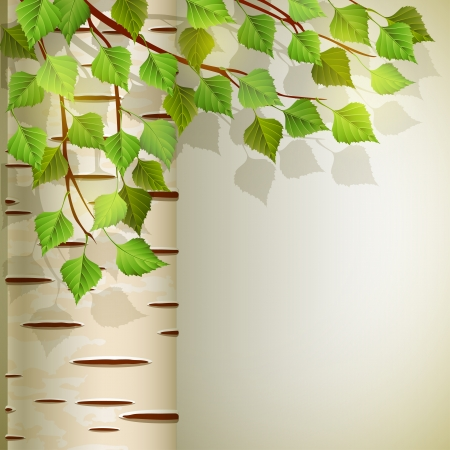 Vector illustration - background with birch, EPS 10, RGB Use transparency and blend modes
