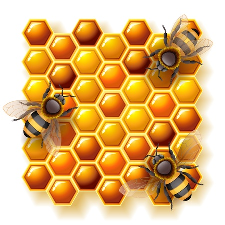 Vector illustration - bees on honeycomb, EPS 10, RGB.Use transparency and blend modes Vector