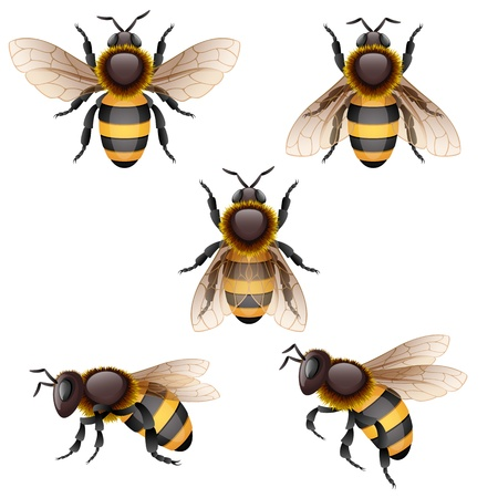 Vector illustration - bees on white, EPS 10, RGB. Use transparency.