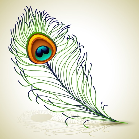 Vector illustration - peacock feather, EPS 10, RGB.Use transparency and blend modes 矢量图像