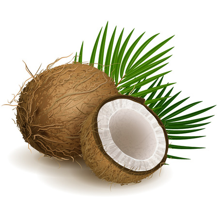 Vector illustration - Coconut isolated on white