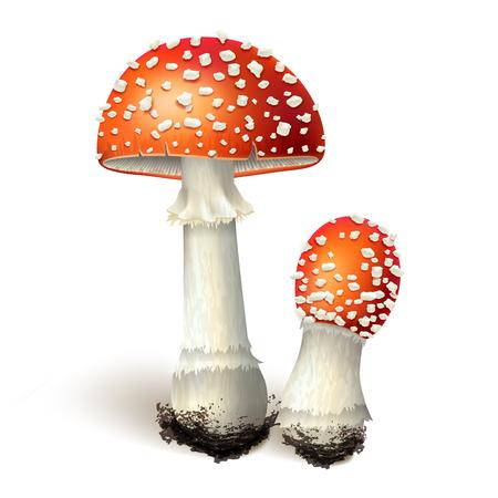 Vector illustration - amanita mushrooms set Isolated on white background. EPS 10
