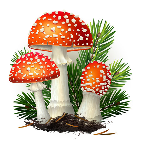 Vector illustration - amanita mushrooms set Isolated on white background. EPS 10