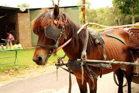 amish buggy: An Amish Carriage at ancient city in Thailand