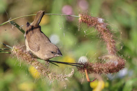 soft   focus: sparrow bird in tree soft focus Stock Photo