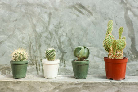 cactus flower: Cactus in pots on grey concrete wall - Background
