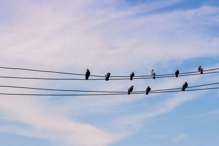 birds on a wire: Birds on a wire against blue sky background Stock Photo
