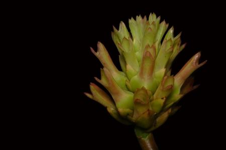 Wildflower in Chet Khot at Thailand