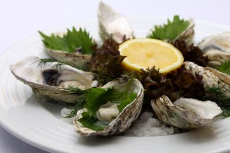 Large Fresh Oyster Stock Photo