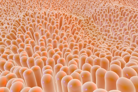 medical distribution: An organic tissue super magnified, show its fibers, texture and material details Stock Photo