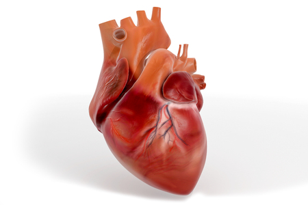 3D Heart Illustration With Textures