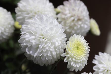 Tropical White Flower Bloom