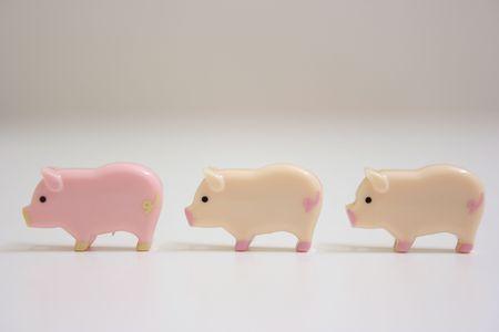 Swines wykładanych na