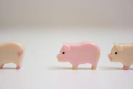 lining up: Swines lining up Stock Photo