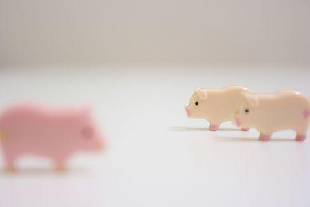 Swines Zdjęcie Seryjne