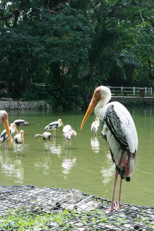 Skupić się na wody ptaka z stałego izolowane