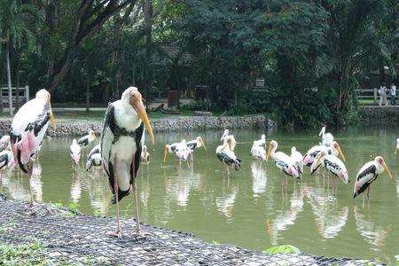 waterbird: Water-bird in a park