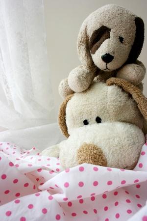 2 Toy puppies Stock Photo - 10203591