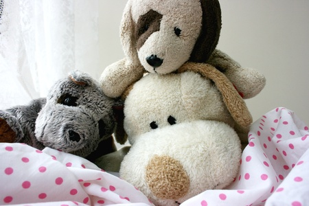 Toy puppies photo