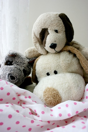 3 Toy puppies photo