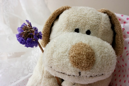 Stuffed toy puppy holding a purple flower Stock Photo - 11135716