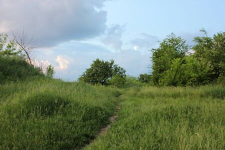 An idyllic spring or summer landscape with trees and path through fresh green grass, blue sky, and white clouds. A calm sunny day.