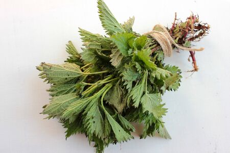 Fresh medicinal plant stinging nettles with green leaves and roots, tied with twine on a white wooden background. Foraging edible plants in spring and summer