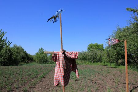 Human-looking bird scare figure in the red and white plaid shirt. Scarecrow in the fruit and vegetable garden