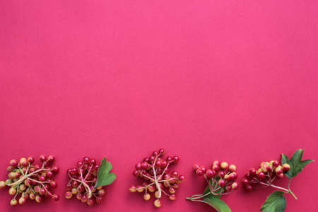 Red berries border. Viburnum on a burgundy background with copy space.