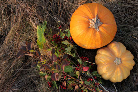 Flat lay composition with pumpkins on the dry grass, and autumn flower bouquet. Holidays Halloween Thanksgiving background. Copy space. Selective focus