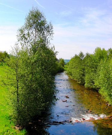 trees on the river photo