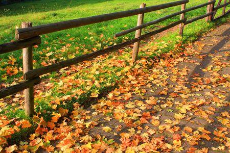 Autumn Stock Photo - 4772119
