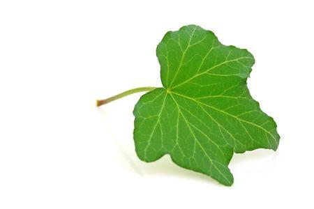 Ivy Stock Photo - 4839754