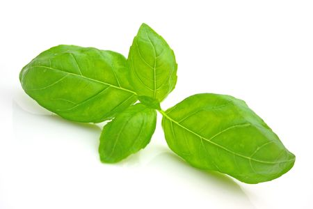 Basil Stock Photo - 5073557