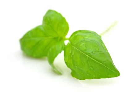 Basil Stock Photo - 5073555