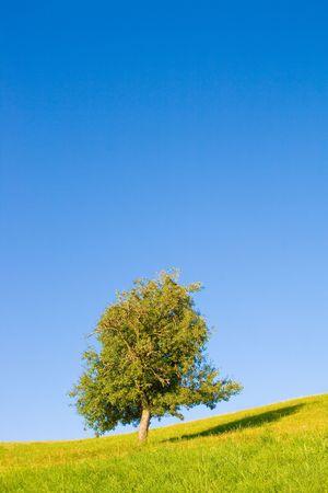Idyllic meadow with tree photo
