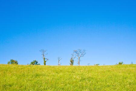 Idyllic meadow with tree Stock Photo - 5648024